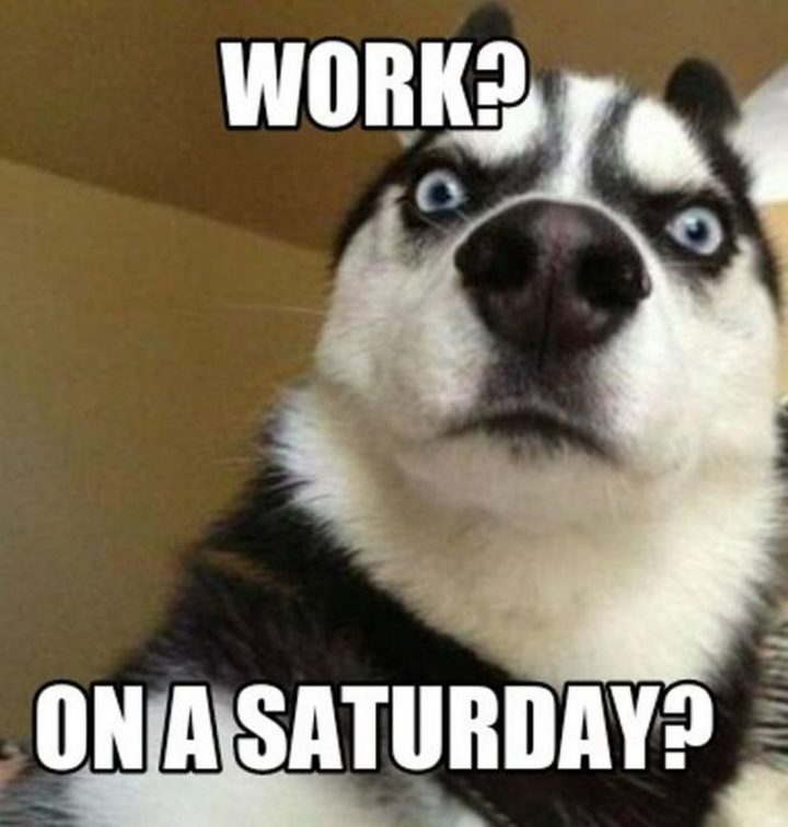 "101 Saturday Memes - ""Work? On a Saturday?"""