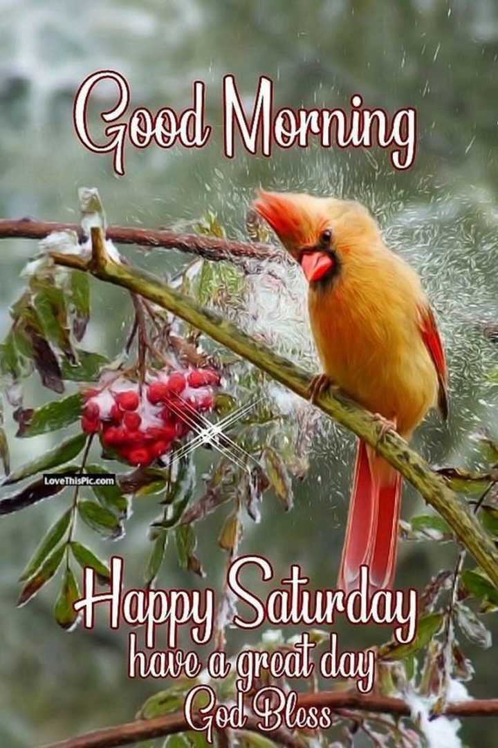 """59 Saturday Quotes - """"Good morning. Happy Saturday, have a great day. God Bless."""" - Unknown"""