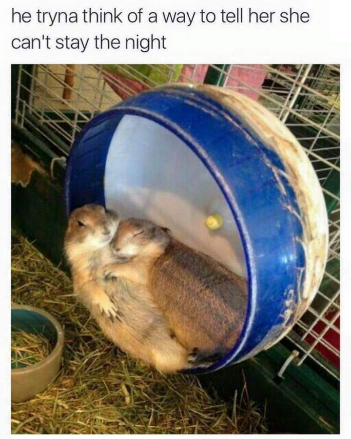 """79 Sex Memes - """"He tryna think of a way to tell her she can't stay the night."""""""