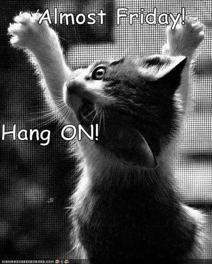 """101 Thursday Memes - """"Almost Friday! Hang on!"""""""