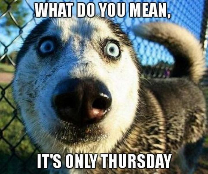 """101 Thursday Memes - """"What do you mean, it's only Thursday."""""""