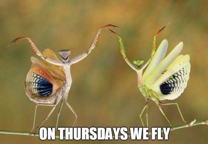 """101 Thursday Memes - """"On Thursdays, we fly."""""""