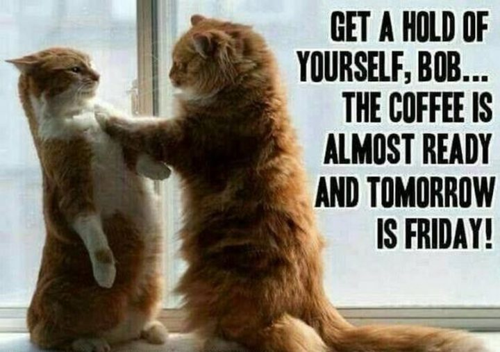 """101 Thursday Memes - """"Get a hold of yourself, Bob...The coffee is almost ready and tomorrow is Friday!"""""""