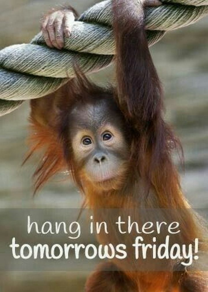"""101 Thursday Memes - """"Hang in there, tomorrow's Friday!"""""""
