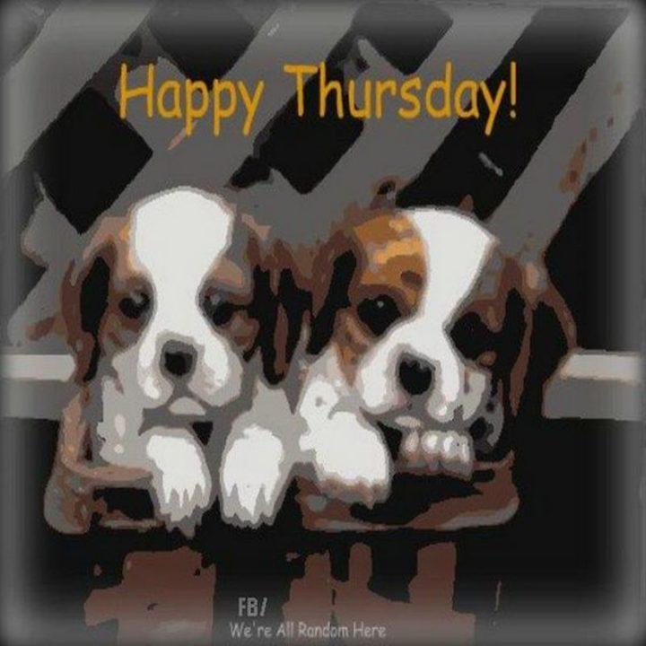 "101 Thursday Memes - ""Happy Thursday!"""