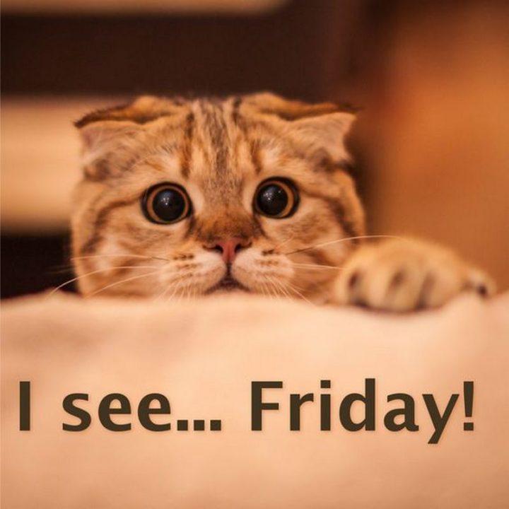 """""""I see...Friday!"""""""