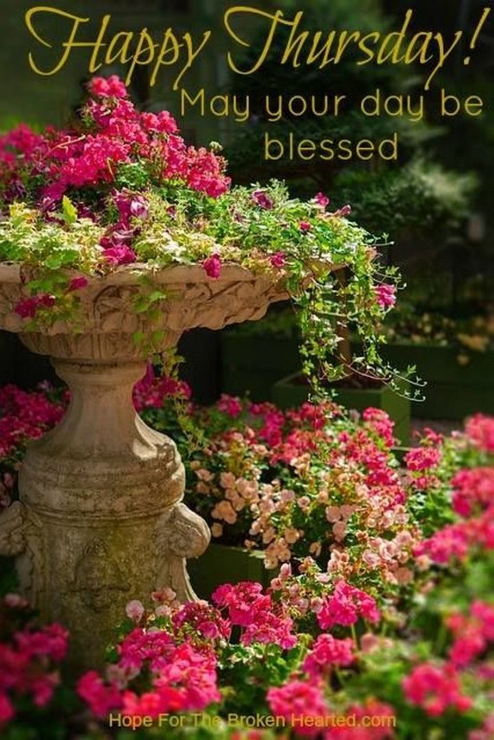 """""""Happy Thursday! May your day be blessed."""""""