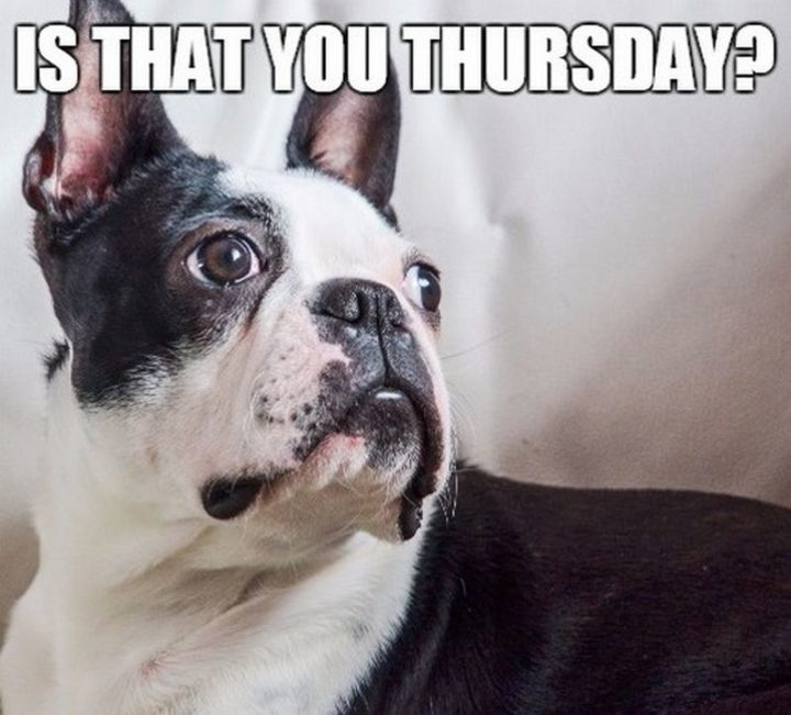 """""""Is that you Thursday?"""""""