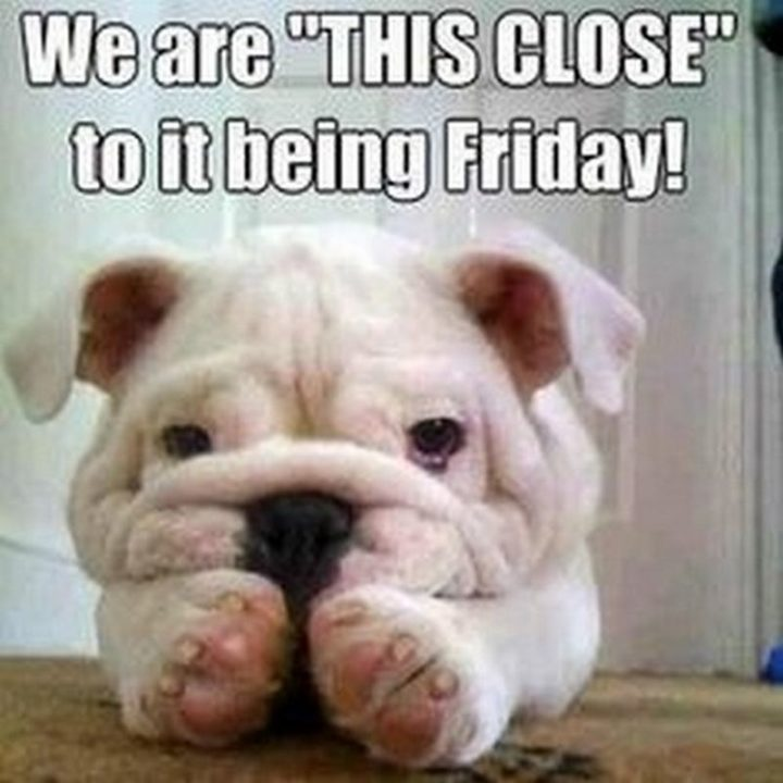 """""""We are 'THIS CLOSE' to it being Friday!"""""""