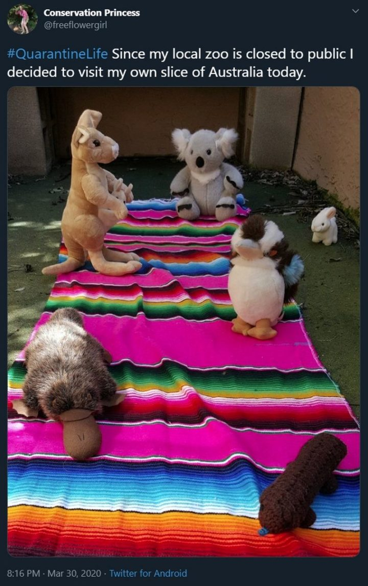 """53 Coronavirus Memes - """"Since my local zoo is closed to the public I decided to visit my own slice of Australia today. Quarantine Life."""""""