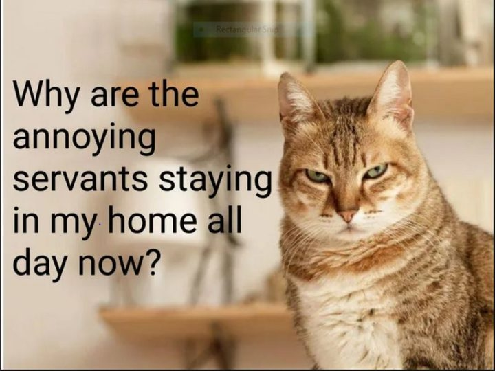 """53 Coronavirus Memes - """"Why are the annoying servants staying in my home all day now?"""""""