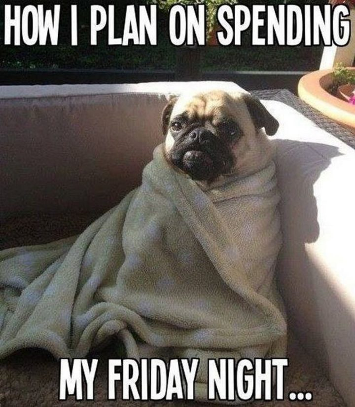 """75 Introvert Memes - """"How I plan on spending my Friday night..."""""""