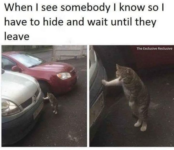 """75 Introvert Memes - """"When I see somebody I know so I have to hide and wait until they leave."""""""