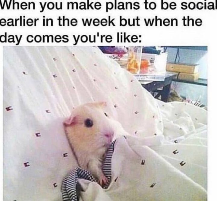 """75 Introvert Memes - """"When you make plans to be social earlier in the week but when the day comes you're like:"""""""
