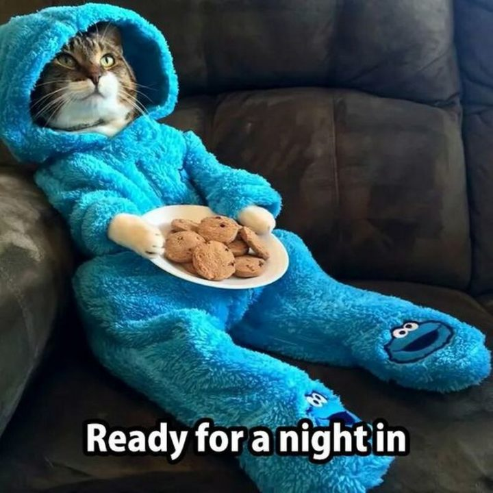 """75 Introvert Memes - """"Ready for a night in."""""""