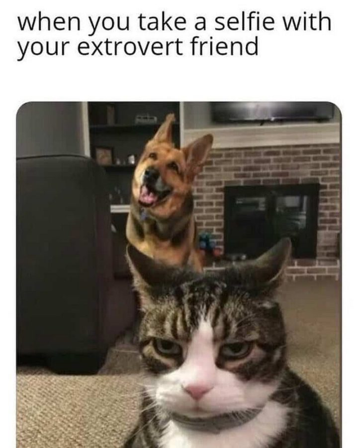 """75 Introvert Memes - """"When you take a selfie with your extrovert friend."""""""