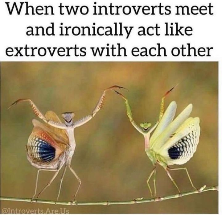"""75 Introvert Memes - """"When two introverts meet and ironically act like extroverts with each other."""""""