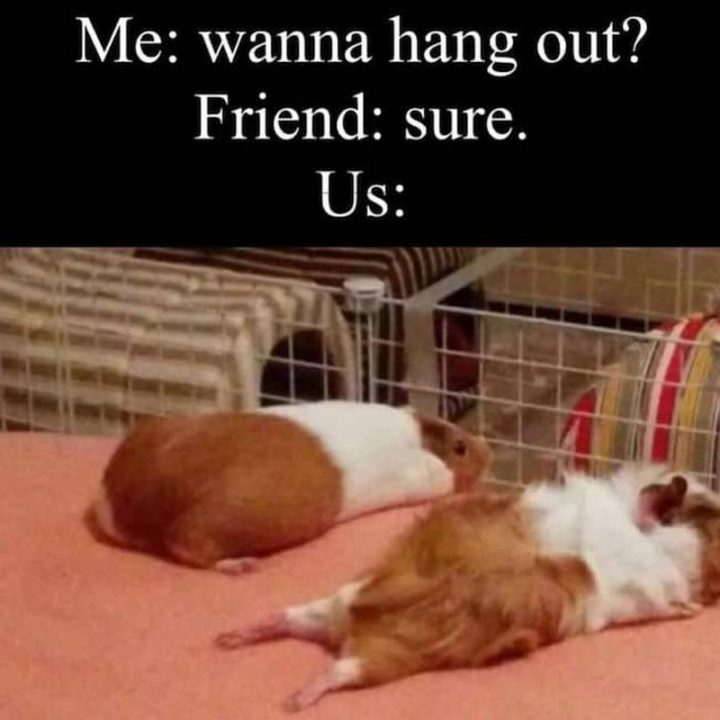 """75 Introvert Memes - """"Me: Wanna hang out? Friend: Sure. Us:"""""""