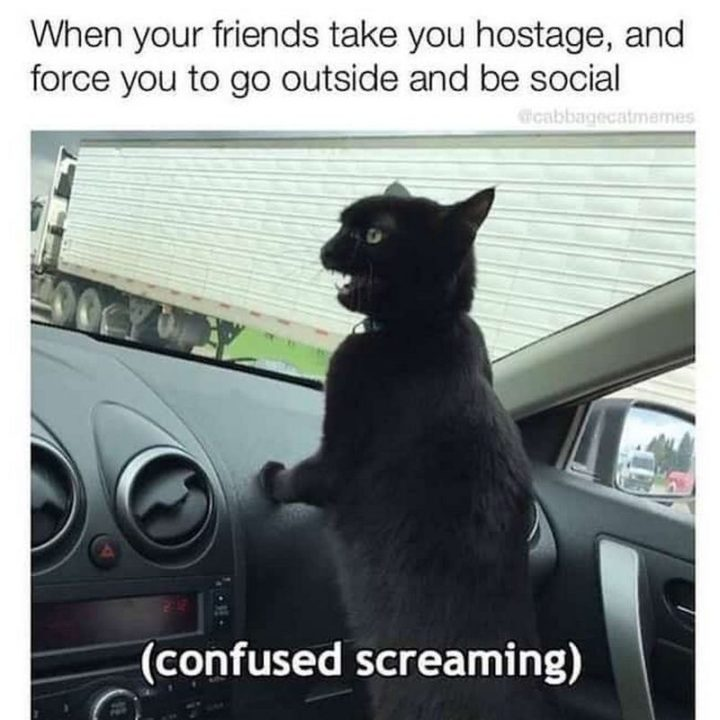 """75 Introvert Memes - """"When your friends take you hostage and force you to go outside and be social: (Confused screaming)."""""""