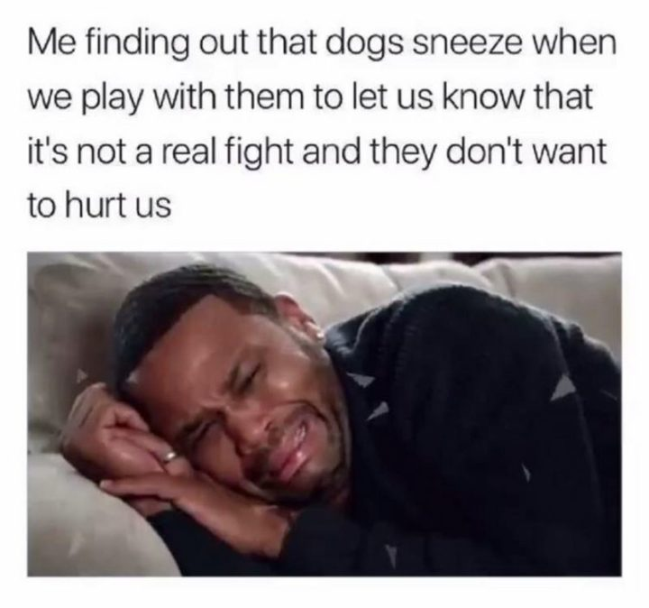 """53 Sad Memes - """"Me finding out that dogs sneeze when we play with them to let us know that it's not a real fight and they don't want to hurt us."""""""
