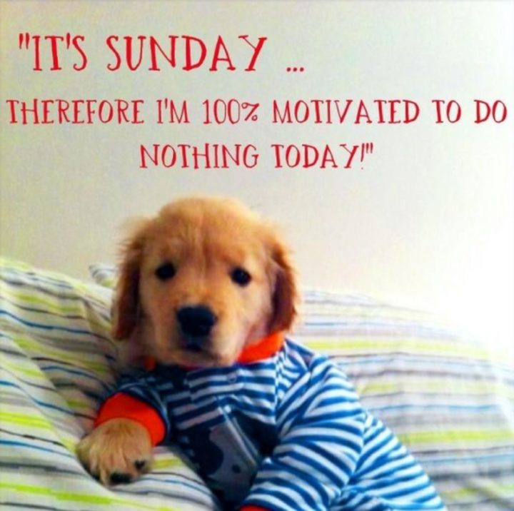 """47 Sunday Quotes - """"It's Sunday, therefore I am 100% motivated to do nothing today!"""" - Unknown"""
