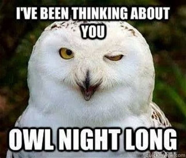 """77 """"Thinking of You"""" Memes - """"I've been thinking about you owl night long."""""""