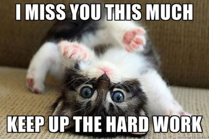 """77 """"Thinking of You"""" Memes - """"I miss you this much. Keep up the hard work."""""""