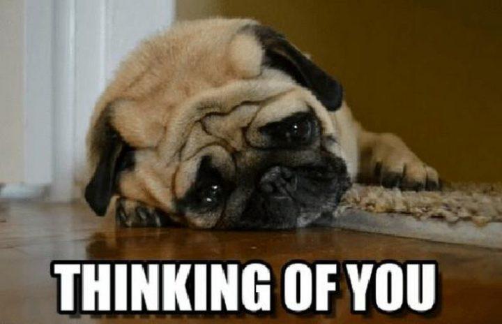 "77 ""Thinking of You"" Memes - ""Thinking of you."""