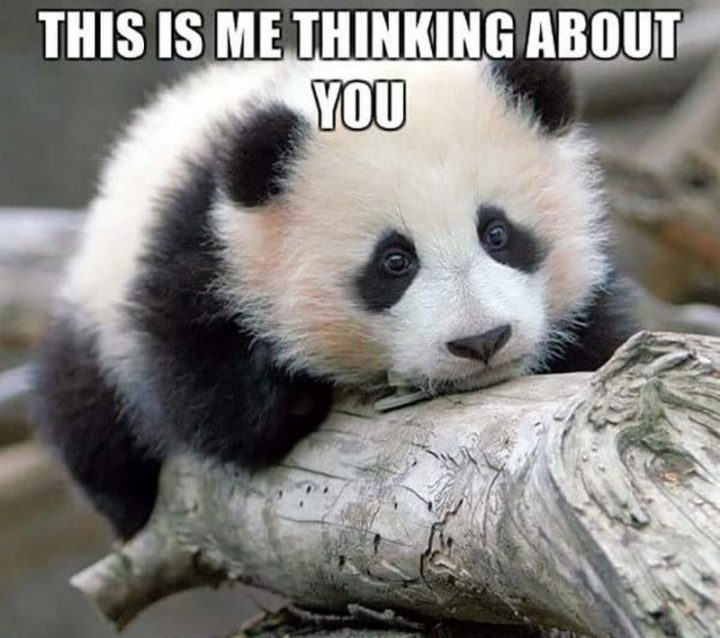 """77 """"Thinking of You"""" Memes - """"This is me thinking about you."""""""