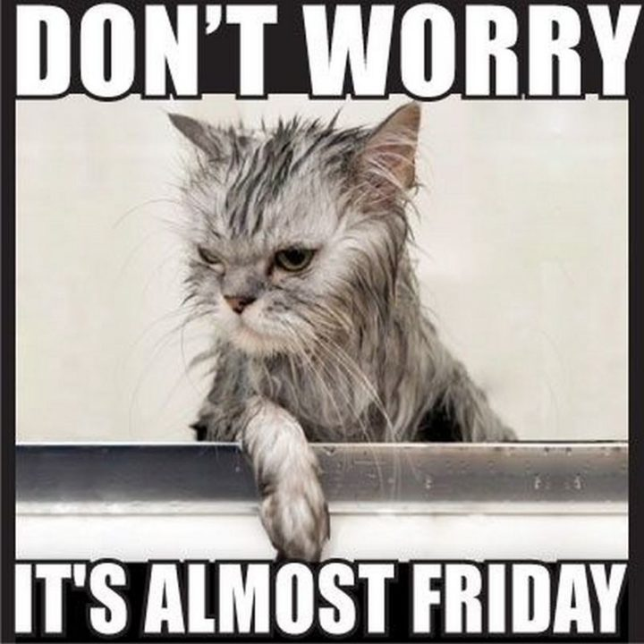 """55 """"Almost Friday"""" Memes - """"Don't worry, it's almost Friday."""""""