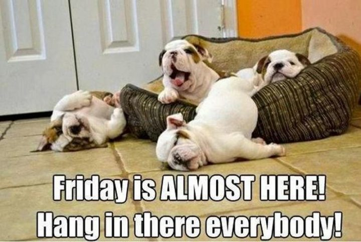 """55 """"Almost Friday"""" Memes - """"Friday is ALMOST HERE! Hang in there everybody!"""""""