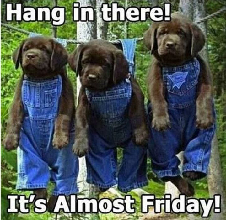 """55 """"Almost Friday"""" Memes - """"Hang in there! It's almost Friday!"""""""