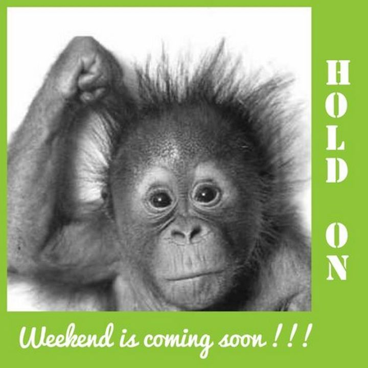 """55 """"Almost Friday"""" Memes - """"Hold on, weekend is coming soon!!!"""""""