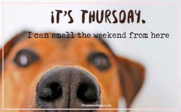 """55 """"Almost Friday"""" Memes - """"It's Thursday. I can smell the weekend from here."""""""
