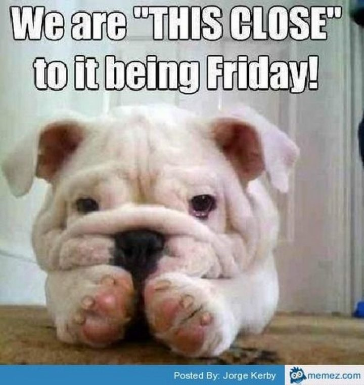 """55 """"Almost Friday"""" Memes - """"We are 'THIS CLOSE' to it being Friday!"""""""