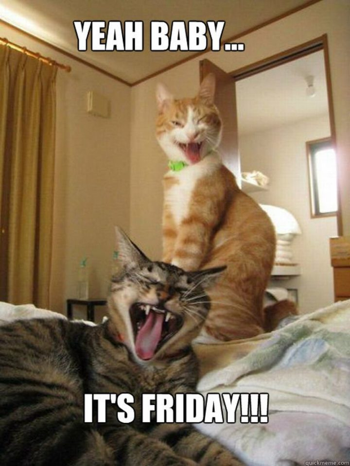 """55 """"Almost Friday"""" Memes - """"Yeah baby...It's Friday!!!"""""""