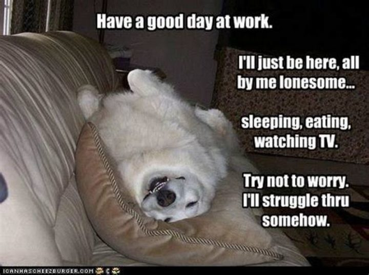 "101 ""Have a Great Day"" Memes - ""Have a good day at work. I'll just be here, all by me lonesome...Sleeping, eating, watching TV. Try not to worry. I'll struggle through somehow."""