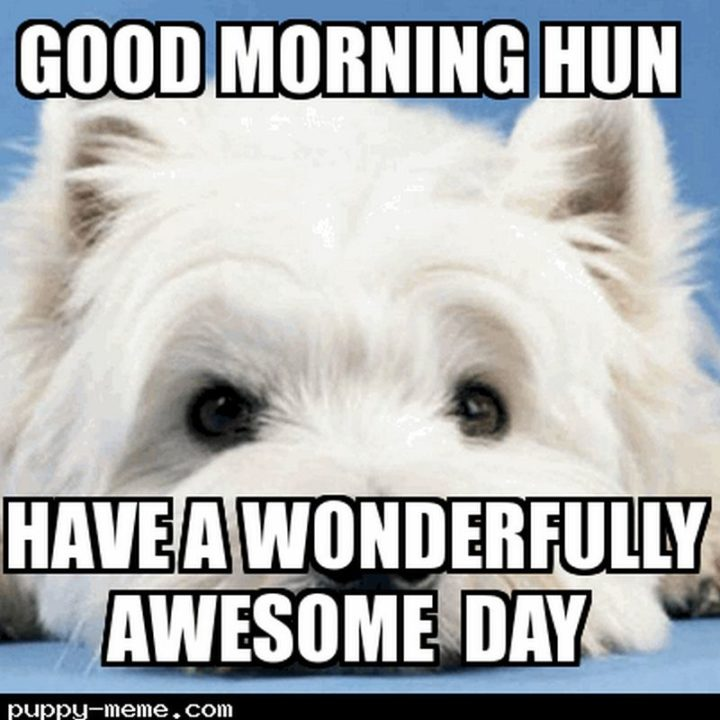 "101 ""Have a Great Day"" Memes - ""Good morning hun. Have a wonderfully awesome day."""