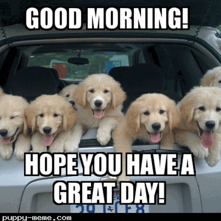 "101 ""Have a Great Day"" Memes - ""Good morning! Hope you have a great day!"""
