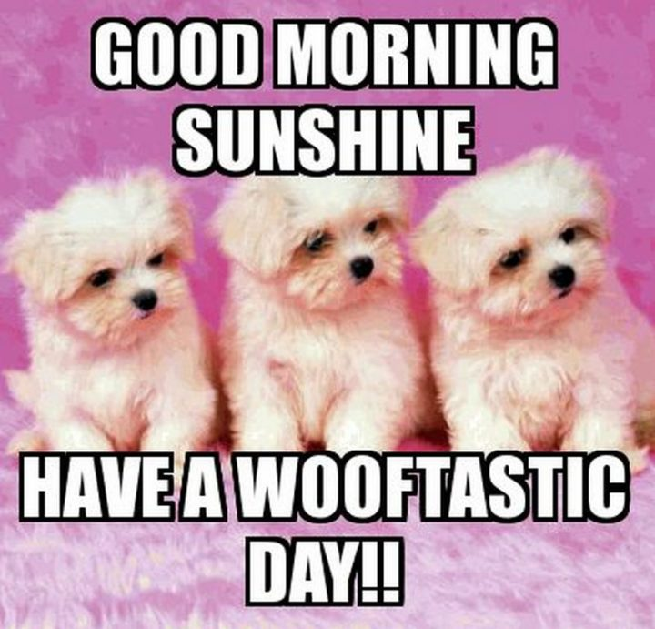 "101 ""Have a Great Day"" Memes - ""Good morning sunshine. Have a wooftastic day!!"""