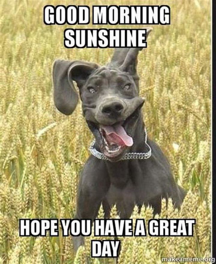 "101 ""Have a Great Day"" Memes - ""Good morning sunshine. Hope you have a great day."""