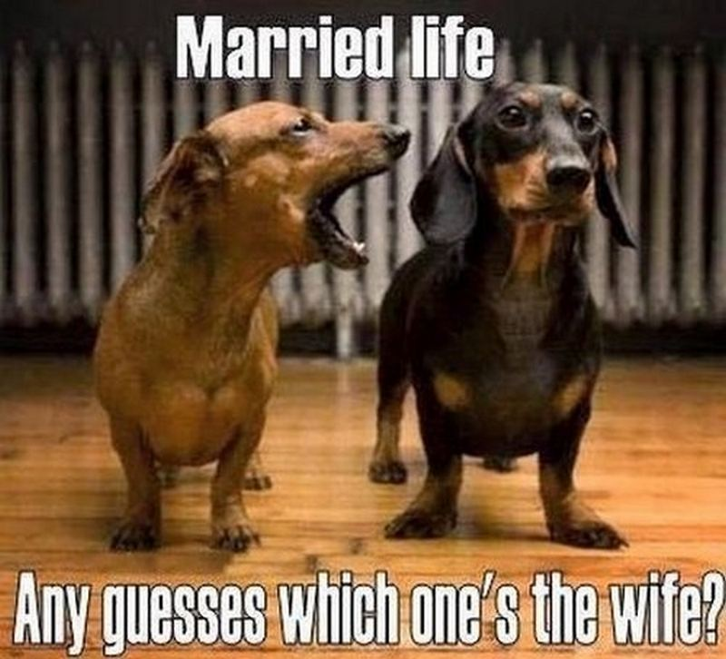 """""""Married life. Any guesses which one's the wife?"""""""
