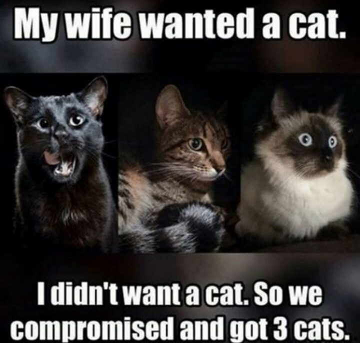"""""""My wife wanted a cat. I didn't want a cat. So we compromised and got 3 cats."""""""