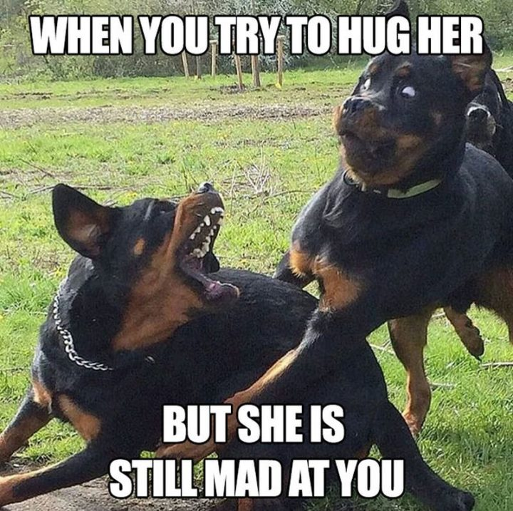 """""""When you try to hug her but she is still mad at you."""""""