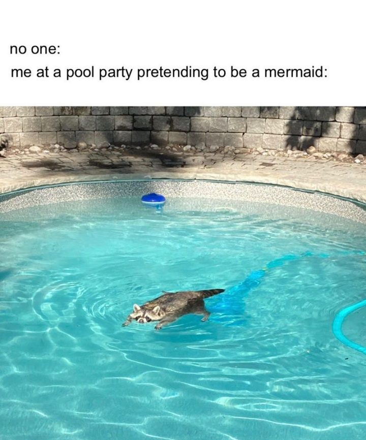 """""""No one: Me: At a pool party pretending to be a mermaid."""""""