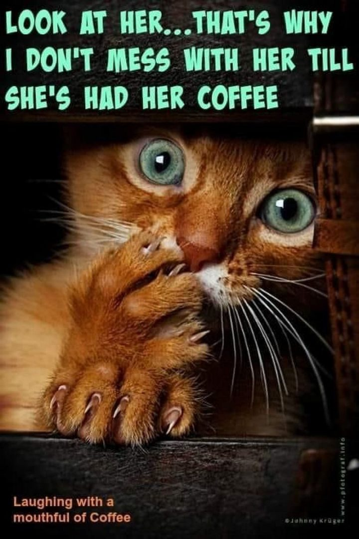 """""""Look at her...That's why I don't mess with her till she's had her coffee."""""""
