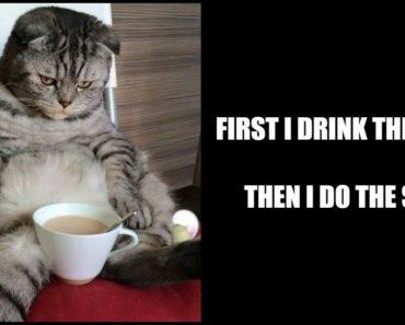 87 Funny Coffee Memes.