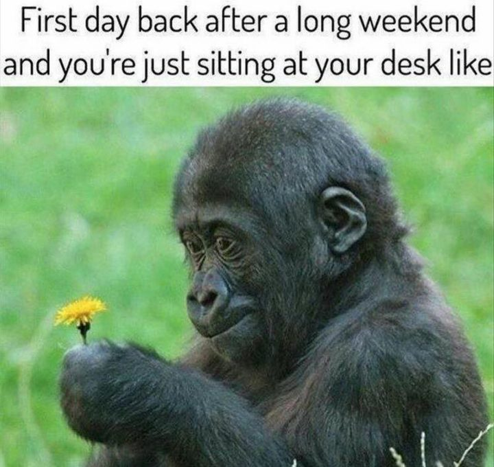 """""""The first day back after a long weekend and you're just sitting at your desk like..."""""""
