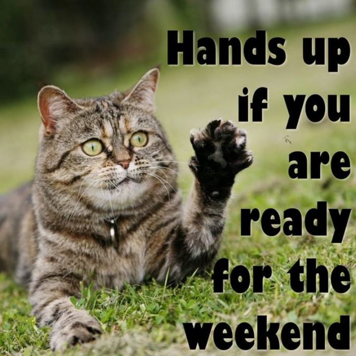 """""""Hands up if you are ready for the weekend."""""""