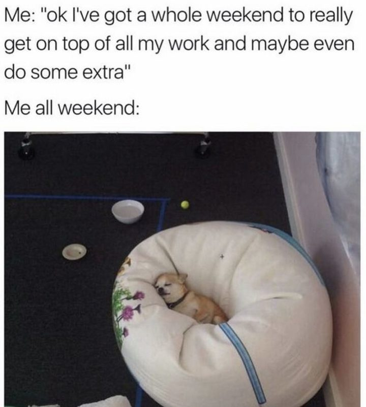 """""""Me: Ok I've got a whole weekend to really get on top of all my work and maybe even do some extra. Me all weekend:"""""""